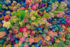 Colourful Dream Forest